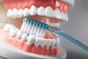 person brushing a model of teeth